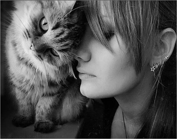 Фото любовь, кошки, девушка