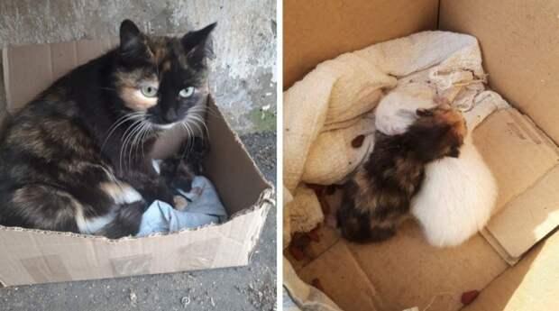 Мама-кошка в ужасе старалась спасти котят с детской площадки