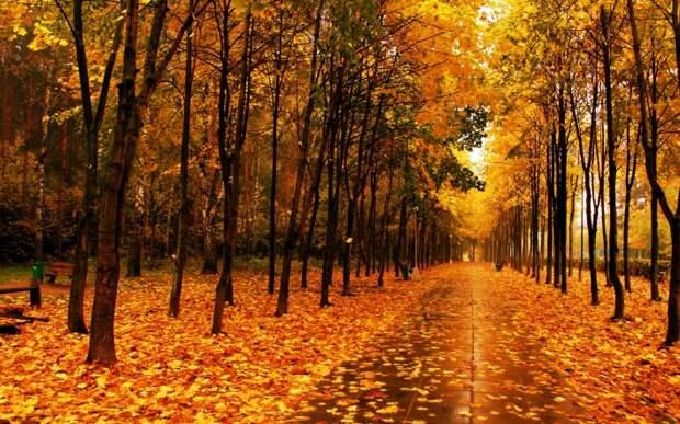 Стихи про осень: