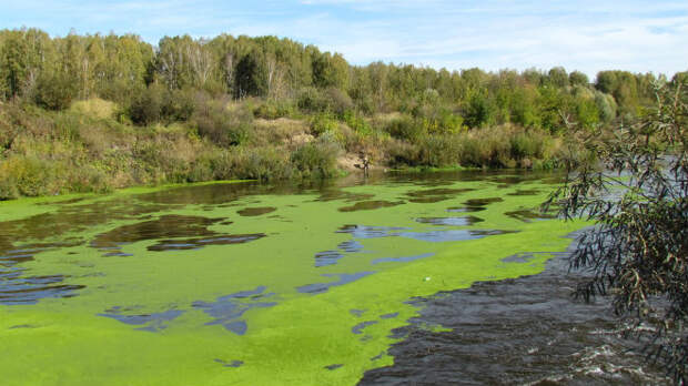Опасные паразиты иинфекции, подстерегающие купальщиков внаших водоемах