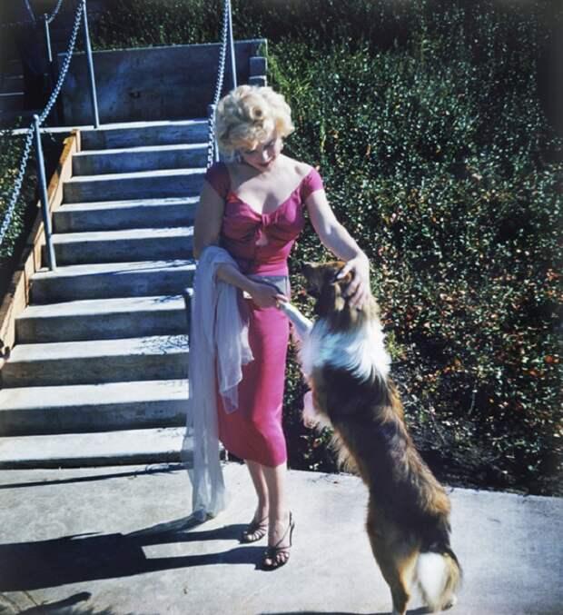 Мэрилин со своей любимицей собакой колли.