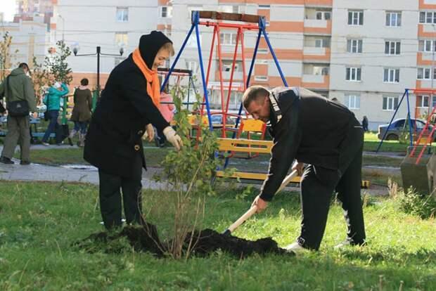 Оштрафовать могут не только за срубленное дерево, но и за посаженное