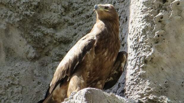 В Ростовском зоопарке поселился краснокнижный орлан-белохвост