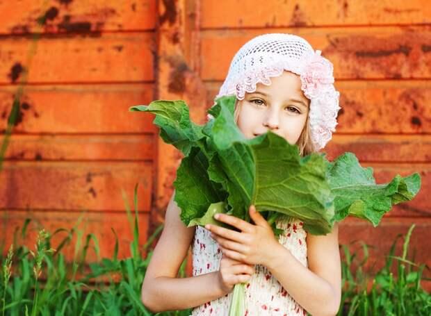 способ применения листьев лопуха