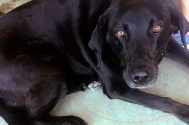 Собака спасла обвиненного в сексуальном домогательстве мужчину от 50 лет тюрьмы дочь, обвинение, отец, папа, семья, собака, суд
