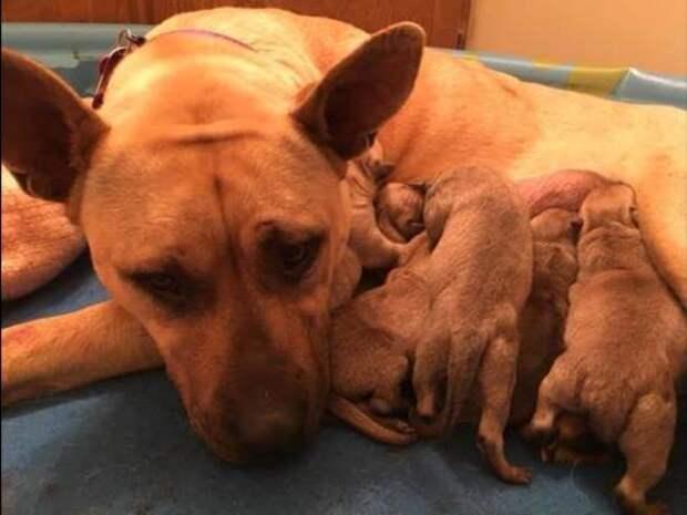 Спасая собаку от усыпления, мужчина спас еще шесть щенков
