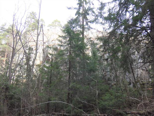 Лес у подножья Паасо
