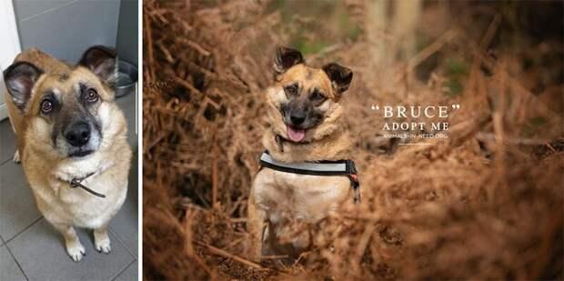 8. Брюс животные, помощь, портрет, приют, собака, фотограф, хозяин