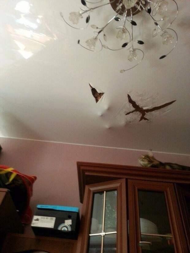 Котам тоже нравится ремонт
