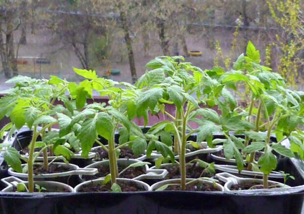 Огород в городе: Как вырастить на балконе зелень и овощи