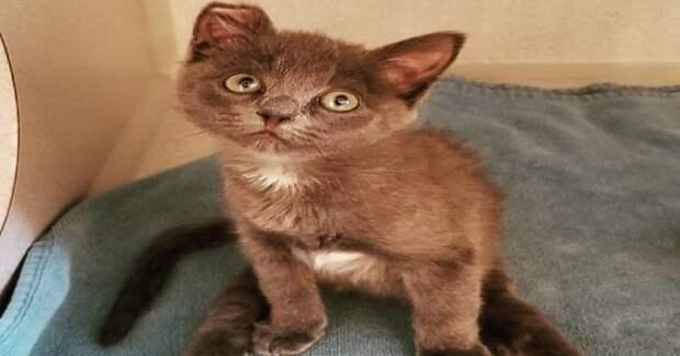 Котёнок, чьи лапки были парализованными, снова их чувствует, вопреки всему