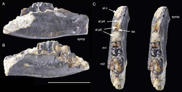 Рис. 3. Голотип азилестеса MNHN.F CTE215