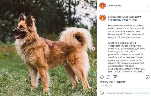 Фото дня: пес с беличьим хвостом из приюта на Машкинском шоссе ищет «своего» человека
