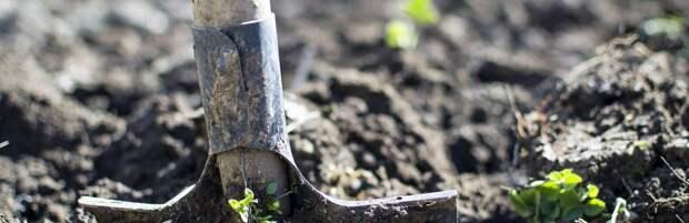300 тысяч деревьев планируют высадить осенью в Алматы