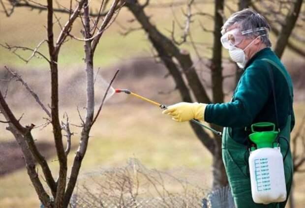 Как подготовить деревья к зимовке, чтобы защитить от вредителей и хворей