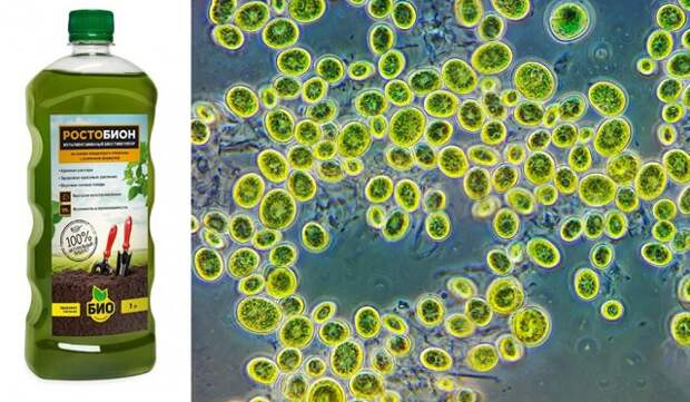 удобрения нового поколения на основе хлореллы