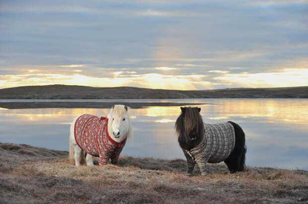 scotland24 24 фото, которые станут причиной вашей поездки в Шотландию