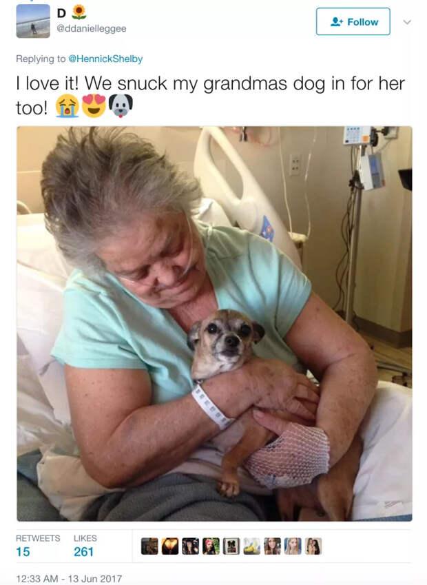 Жительница США пронесла в больницу собаку под видом грудного ребенка, чтобы порадовать свою больную бабушку