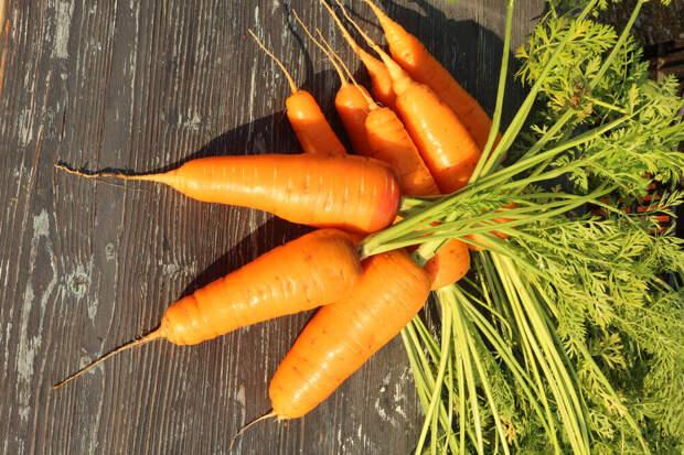 Сорта и гибриды моркови, рекомендованные к использованию для подзимних посевов