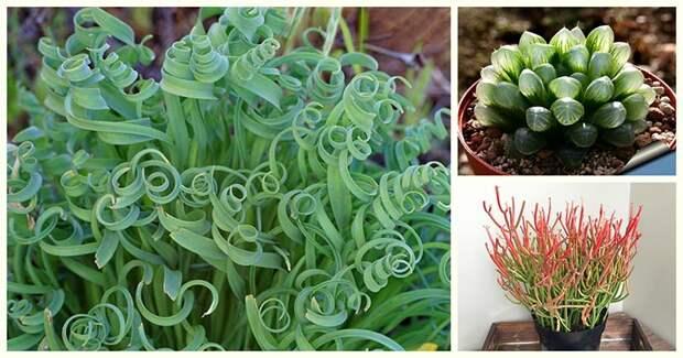 10 удивительных растений, которые станут изюминкой любого дома