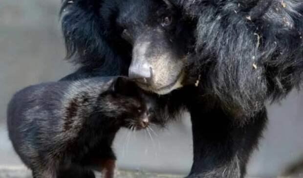 Чем закончилась незаурядная дружба медведицы и кошки длиною в 10 лет