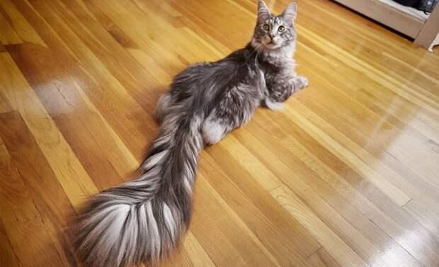 24 кота, которые подняли дерзость на новый уровень