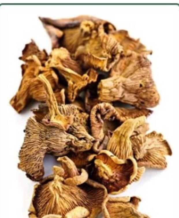 Как мухоморы используются в медицине: полезные свойства настойки из ядовитых грибов