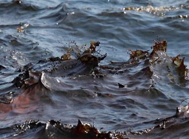 Новый проект поможет очистить северные моря от нефти микробами