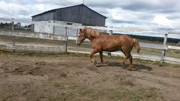 Конь-долгожитель по кличке Дед дважды спасеный от забоя