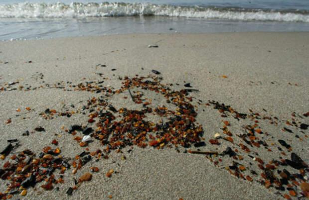 Туристы собирают янтарь на пляже под Калининградом после шторма
