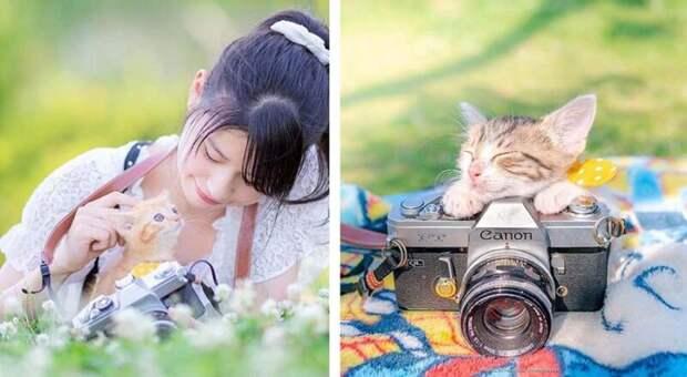 Котята и фотоаппараты: милая фотосерия фотографа из Японии