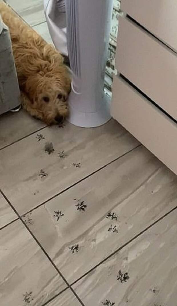 Пес и следы