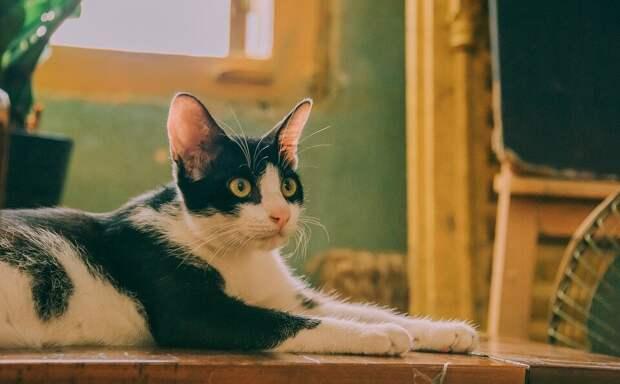 Кошка, попав в дом из приюта, целыми сутками просилась на ручки. А если ей отказывали, ложилась в проходе и осуждающе смотрела