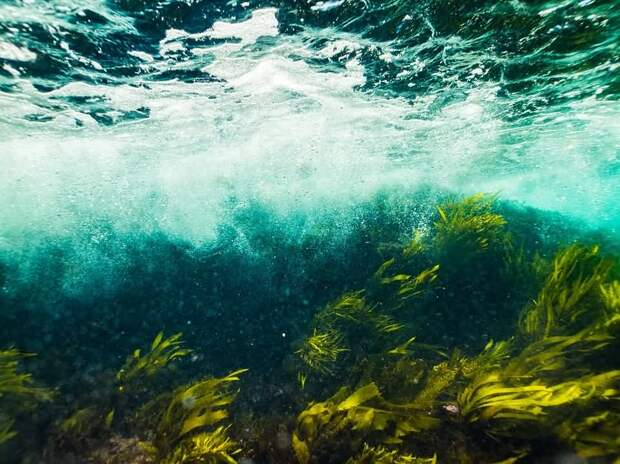 Как бурые водоросли влияют на ваше здоровье?