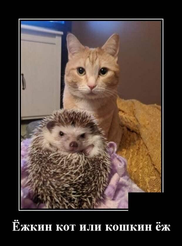 Демотиватор про ежа и кота
