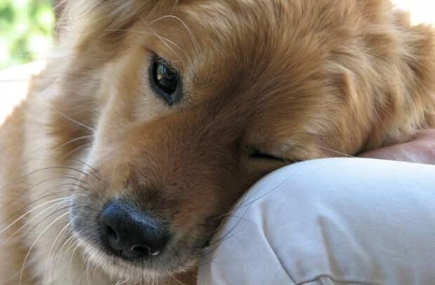 """""""Люблю"""" по-собачьи: как собаки выражают нежные чувства и привязанность"""