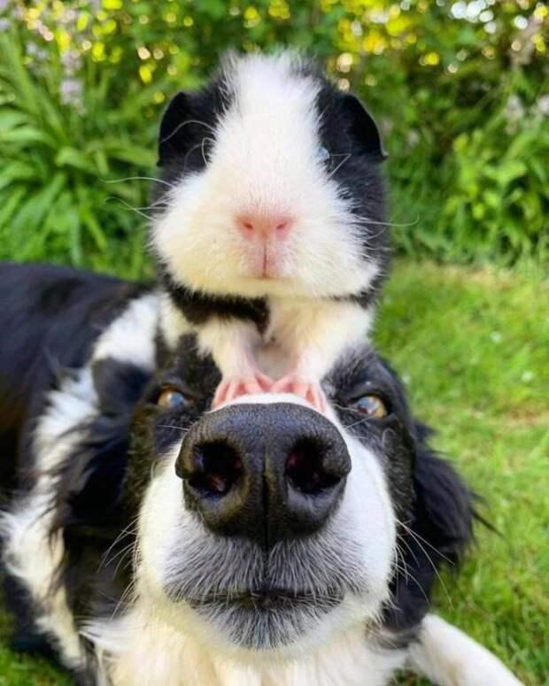Забавные, классные и позитивные картинки с фотографими из сети