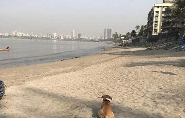 Добровольцы показали, как теперь выглядит пляж Махим Бич