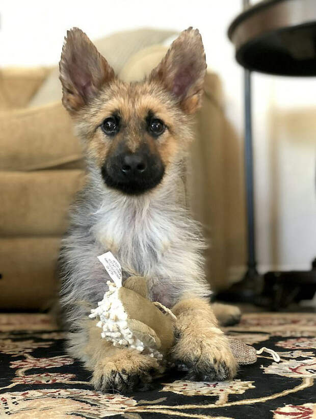Из-за роковой случайности пес навсегда застрял в теле щенка