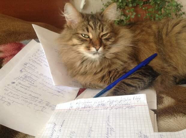 кот сидит на тетрадях