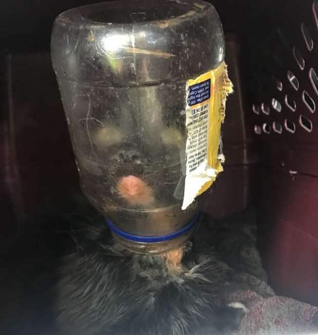 Кот под майонезом! Люди спасли неуловимого зверя, застрявшего в банке