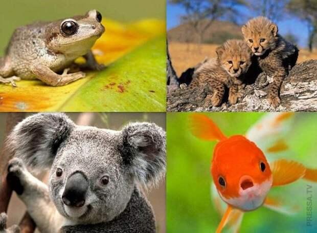 Самые распространённые мифы о животных