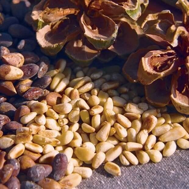 1. Кедровые орехи виагра, восстановление, здоровые, мужское здоровье, полезные продукты, потенция, продукты