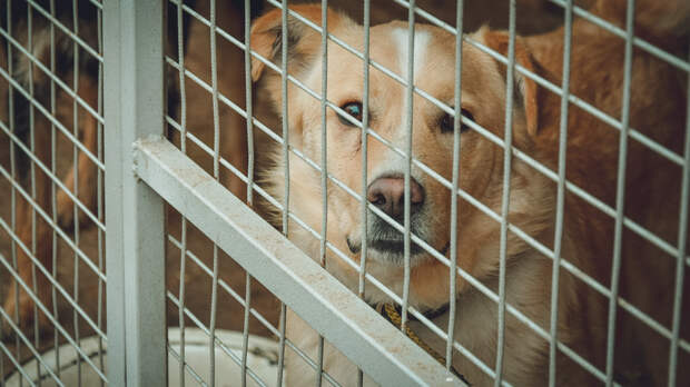 Смертельно опасного пса отловили в Ростовской области