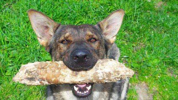 Собака. Фото: из открытого источника