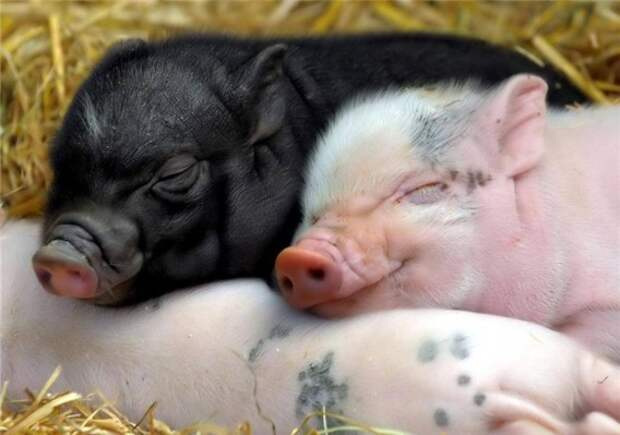 Животным тоже снятся сны загадки, сны, тайны, удивительное рядом