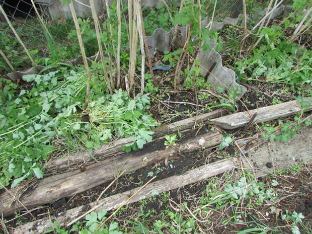 Вкопаны доски-ограничители вдоль малины