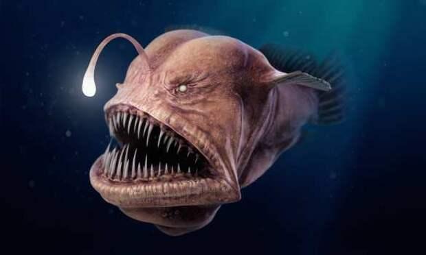Пойманная большая рыба утащила украинца надноозера | Русская весна