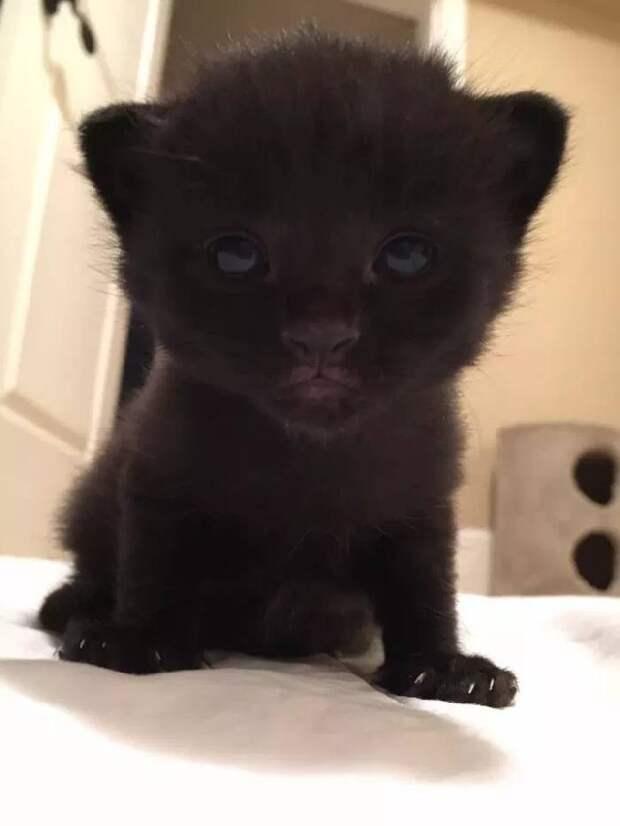 Владелец этой кошки переехал и оставил ее на улице. Но сосед заметил ее растущий живот