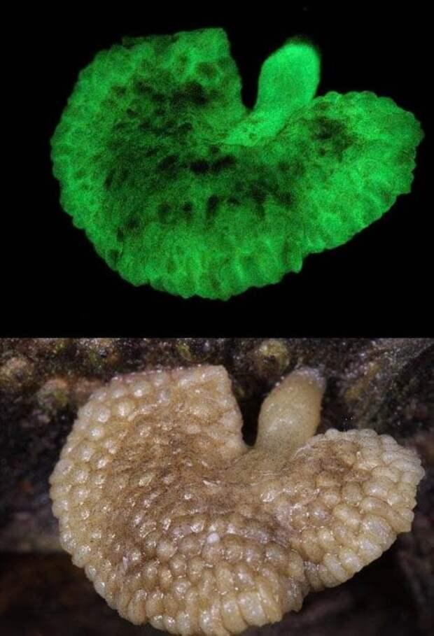 Самые жуткие растения планеты